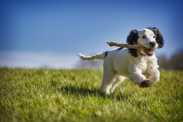 Gaudeix De Les Vacances En Un Hotel Pet-friendly